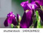 spring spirit  close up of... | Shutterstock . vector #1404269822
