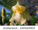 spring spirit  close up of... | Shutterstock . vector #1404269825