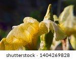 spring spirit  close up of... | Shutterstock . vector #1404269828