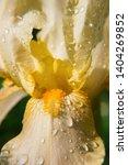 spring spirit  macro part of... | Shutterstock . vector #1404269852