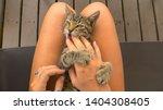 pov  petting a cute small... | Shutterstock . vector #1404308405