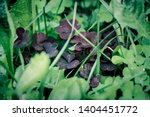 Macro Photo Of Nature Plant...