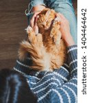 Cute Ginger Cat Dozing On Woman ...