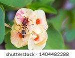 hornet  eusocial wasps with...