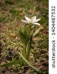 single star of bethlehem white... | Shutterstock . vector #1404487532