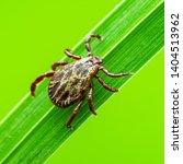 Encephalitis Tick Insect...