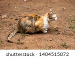 the cat is sitting on the... | Shutterstock . vector #1404515072