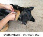 women help remove tick from the ...   Shutterstock . vector #1404528152