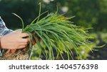 farmer's hands are holding an... | Shutterstock . vector #1404576398