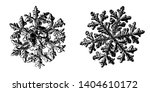 two snowflakes isolated on... | Shutterstock . vector #1404610172