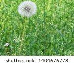 very beautiful dandelion. side... | Shutterstock . vector #1404676778