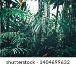 beautiful of green tropical... | Shutterstock . vector #1404699632