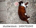 close up of brown cat laying on ... | Shutterstock . vector #1404701045