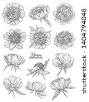 peony flowers set hand drawn in ... | Shutterstock . vector #1404794048