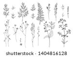 herbs and flowers painted black ... | Shutterstock .eps vector #1404816128