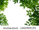 tropical tree leaves on white... | Shutterstock . vector #1404909155