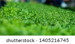 green leaves of plants in the... | Shutterstock . vector #1405216745