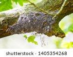 macro closeup of white nest of... | Shutterstock . vector #1405354268