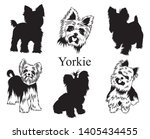 Stock vector set of yorkies collection of pedigree dogs black white illustration of a york dog vector drawing 1405434455