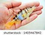 Sea Fishing. Little Sea Fish I...