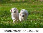 Stock photo golden retriever puppy 140558242