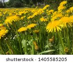 the yellow color of the... | Shutterstock . vector #1405585205