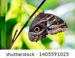 Butterfly Park In Peru Machu...