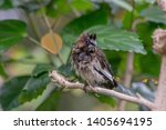 disheveled bird perched in a...   Shutterstock . vector #1405694195