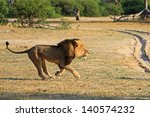 cecil the black maned lion... | Shutterstock . vector #140574232