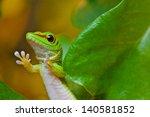 madagascar day gecko  phelsuma... | Shutterstock . vector #140581852