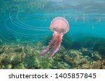 Beautiful Jellyfish Underwater...