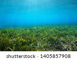 seabed with neptune grass... | Shutterstock . vector #1405857908