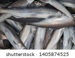 """Close up of spring catch of Hooligan fish (Thaleichthys pacificus), otherwise known as """"eulachon"""" or """"candlefish"""" - type of anadromous smelt; caught in stream near Seward Alaska"""