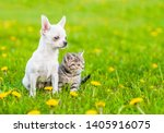 Stock photo chihuahua puppy and a kitten sitting together on green summer grass and looking away empty space 1405916075