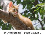 Stock photo ginger kitten sitting on a tree branch on a sunny summer day the kitten is looking to the left 1405933352