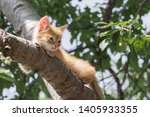 Stock photo ginger kitten sitting on a tree branch on a sunny summer day the kitten is looking to the left 1405933355