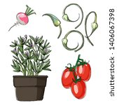 sketch of food. roma tomatoes ... | Shutterstock .eps vector #1406067398
