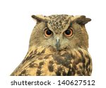 Stock photo european eagle owl isolated on white background 140627512