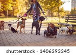 Stock photo happy dogs walking in the park and enjoying with dog walker 1406393345