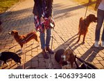 Stock photo dogs on walk with happy dog walker 1406393408