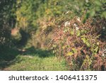 colored tree leaves lush...   Shutterstock . vector #1406411375
