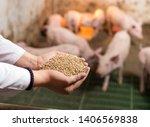 Veterinarian Holding Dry Food...