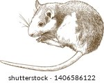 vector antique engraving... | Shutterstock .eps vector #1406586122