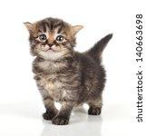 Stock photo beautiful cute days old small kitten standing 140663698