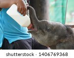 Baby Elephant Being Fed With...