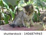 little kitten with fluffy gray... | Shutterstock . vector #1406874965
