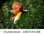 Stock photo the beauty of the bird of paradise 1407141188