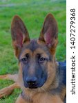 cute puppy of german sheperd...   Shutterstock . vector #1407279368