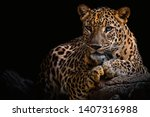 leopard resting on a log