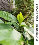 close up young  fresh leaves ... | Shutterstock . vector #1407629285